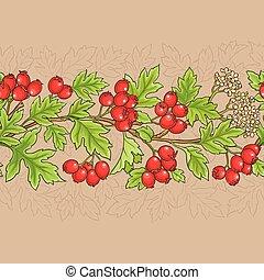 hawthorn vector pattern