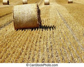 hay 1 - harvest