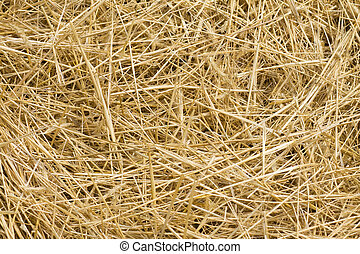 Hay background - Background from ripe yellow hay after...