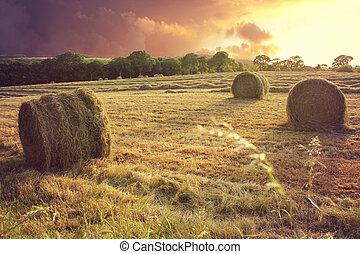 Hay bails at sunset