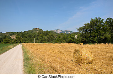 Hay bails in landscape
