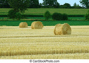 hay bails with green fields