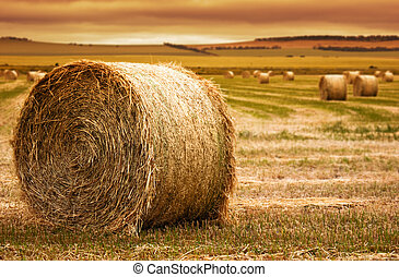Hay Bale Farm - Focus on hay bale in the foreground in rural...