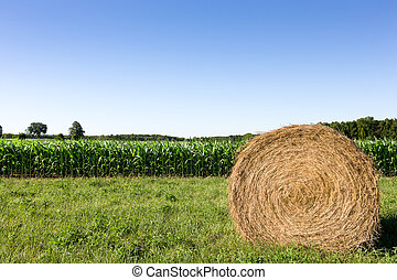 Hay Bale in Corn Field - Golden hay bale in the foreground ...