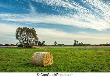Hay bale in the meadow