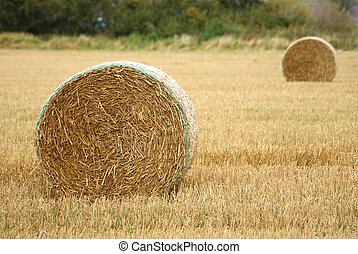 Hay bale newly harvested.