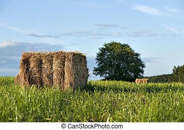 Hay bale on field