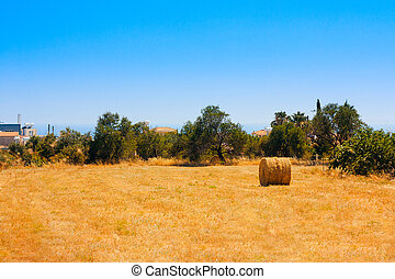 Hay Bale Roll in Field