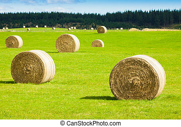 Hay bale rolls in a green field