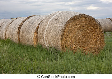 hay bales and green grass