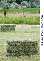 Grass hay bales sitting in a rural field with old fences.