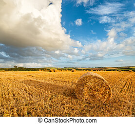 Hay Bales - Hay bales under a blue sky near Padstow in ...