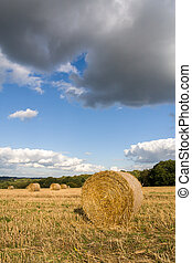 Hay bales in a field after the harvest