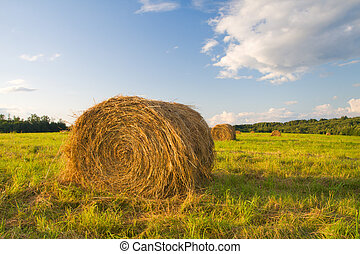 hay bales in a field in sunset time
