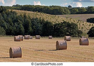 Hay bales in a field near Alnwick Northumberland