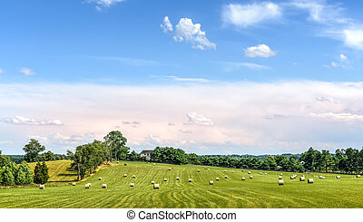 Hay bales in a green grassy field on a Maryland farm in summer at harvest