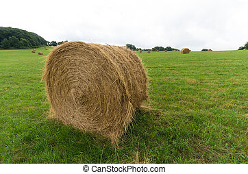 hay bales in a meadow
