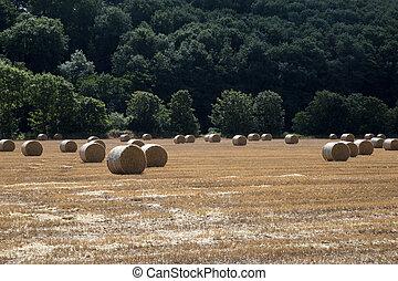 Hay Bales in a Stubble Field