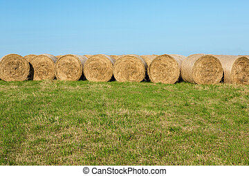 Hay Bales in Countryside Afternoon Sunshine