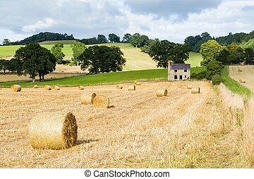 Hay bales in English farmland, UK
