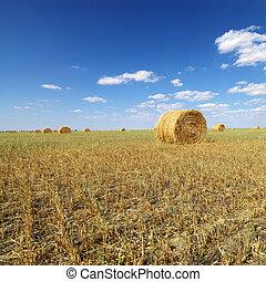 Hay bales in field. - Rural field with circular hay bales.
