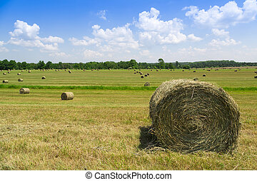 hay bales in green coutryside