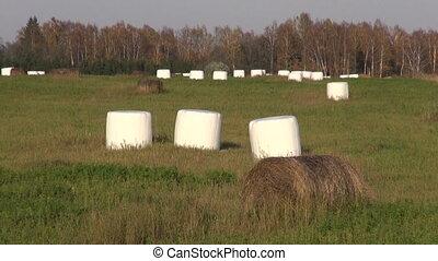 hay bales in plastic on farm field