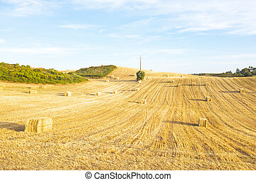Hay bales in the fields from Portugal