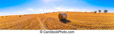 hay bales landscape of yellow grass fields under blue sky ...
