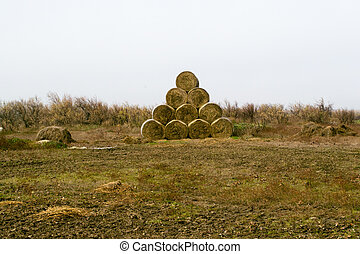 Hay bales on the field after harvest,