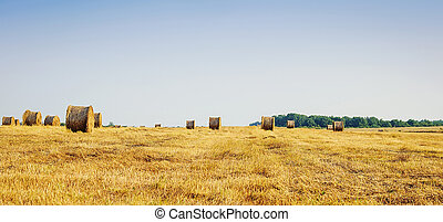 Hay bales on the field after harvest