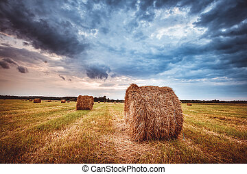 Hay bales on the field at summer evening