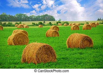 Hay bales - Agricultural landscape of hay bales in a field