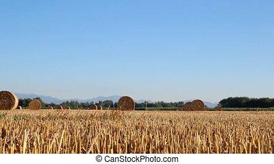 Hay bales sit in a field