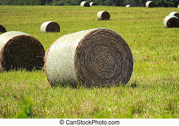 Hay bales sitting in a field during the summer