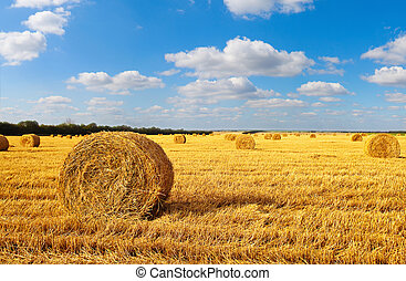 Hay bales sitting in a field