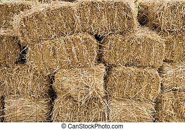 Hay bales stacked and drying - Freshly cut and baled hay...