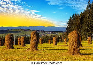 Hay bundles in the field