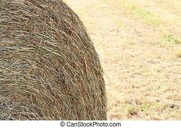 Hay close up