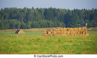 Hay collected in the field.