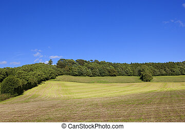 hay field and woodlands