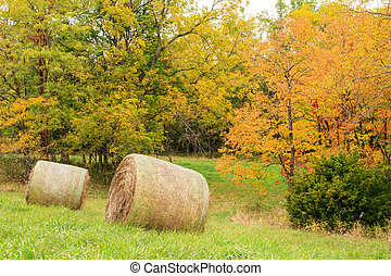 Hay Field during the Fall