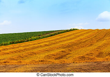 Hay field in summer day.