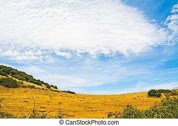 hay field under a cloudy sky in Sardinia
