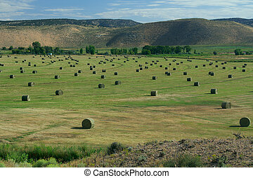 Hay Field with Irrigation and Hay Rolls