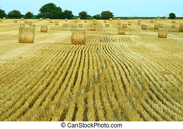 hay fields during bailing