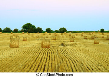 hay fields during harvest