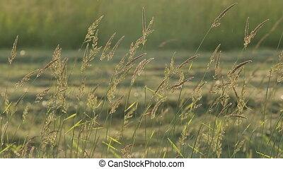 Hay Grass Sun Evening Summer