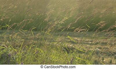Hay Grass Wind Sun Evening
