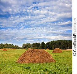 hay in a field, a blue cloudy sky